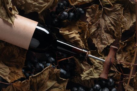 Bottle of red wine with corkscrew. On a table dried vine leaves and blue grapes. Selective focus.
