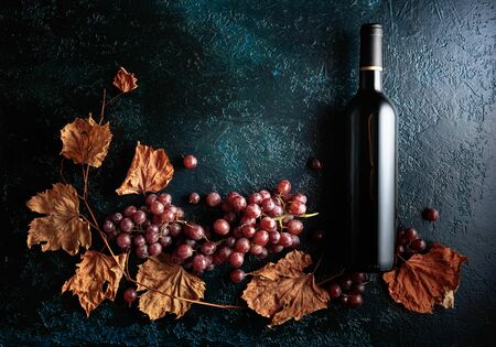Bottle of red wine with ripe grapes and dried up vine leaves. Old dark blue background.  Copy space, top view.