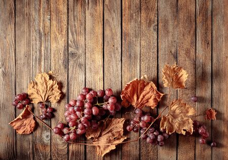 Ripe red grapes and dried up vine leaves. Old wooden background. Copy space, top view.