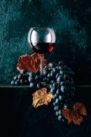 Glass of red wine and blue grapes with dried up vine leaves on an old dark blue background. Copy space.
