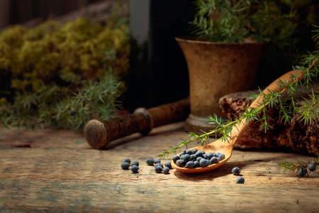 Juniper berries on a old wooden table. In the background branches of juniper and brass mortar with pestle. Focus on a wooden spoon with berries.