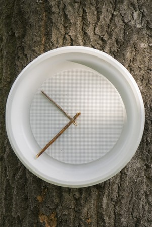 Plastic plate as clock on the tree trunk photo