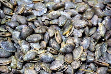 sea clams black gray shells at the fish market in Sihanoukville, Cambodia