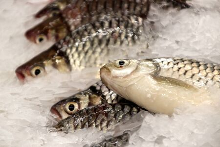 lake fish in ice on a store counter fish market in cambodia Stockfoto