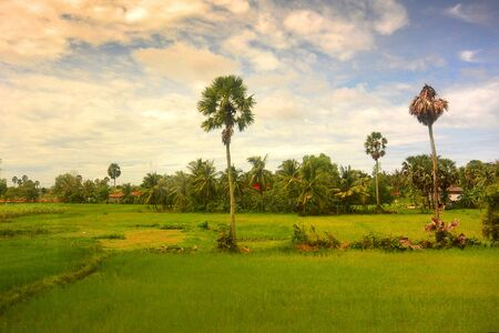 Southeast Asian landscape in rainy season 3, two palm trees in a rice field, Cambodia Stock Photo