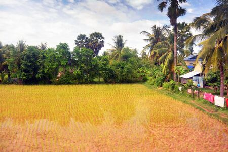 Landscape of Southeast Asia in the rainy season 11, palm trees on the shore of a red water pond, Cambodia