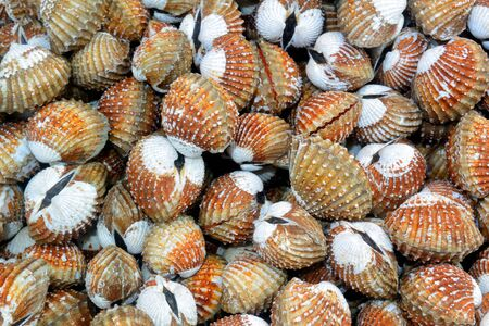 Gray-orange mollusks at the Gulf of Thailand Seafood Market, Sihanoukville, Cambodia
