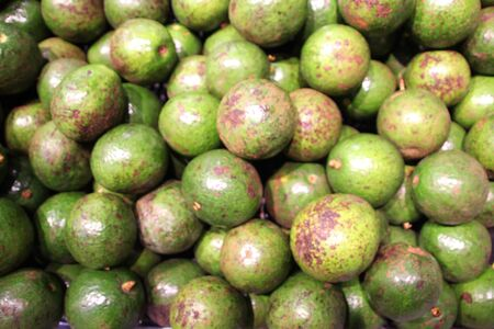 Ball-shaped green avocado is sold in the market, Phnom Penh, Cambodia Фото со стока