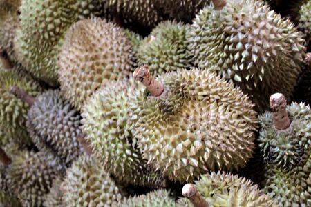 Foul smelling durian, king of fruits on sale in the market in Cambodia