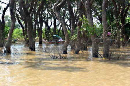 Boating through a flooded forest on Tonle Sap Lake, Cambodia