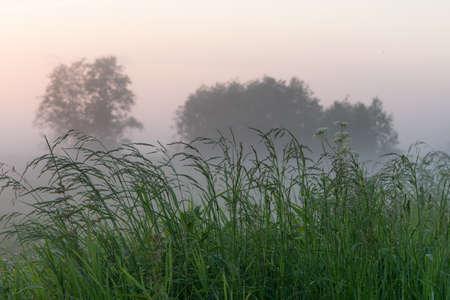 green field in summer in fog, beautiful landscape, forest in the background
