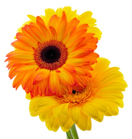 Close-up view to pretty gerberas bouquet on white background