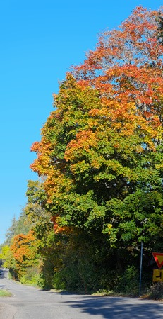 back country: Back country road with bright colored leaves. Stock Photo