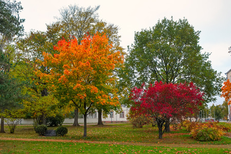 back country: Back country with bright colored leaves.