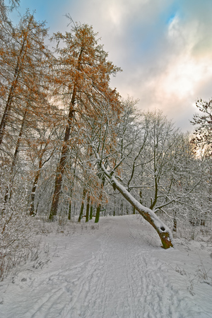 heavy snow: Park trees with heavy snow cover after snowstorm Stock Photo