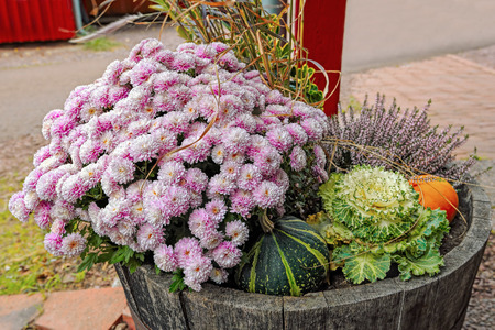pavers: Beautiful fall container-garden - chrysanthemum, decorative cabbage, ornamental kale, ornamental grass, green and yellow pumpkin in old wooden barrel on patio pavers