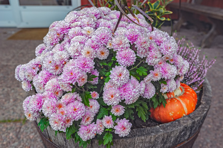 Beautiful Fall Container-garden - Chrysanthemum, Decorative Cabbage on structural gardens, horticulture gardens, cherry gardens, fancy gardens, antique gardens, stone gardens, fragrant gardens, decorating gardens, glass gardens, art gardens, commercial gardens, architectural gardens, victorian gardens, loire valley france chateau de villandry gardens, shrub gardens, roman gardens, love gardens, oriental gardens, herb gardens, painted gardens,