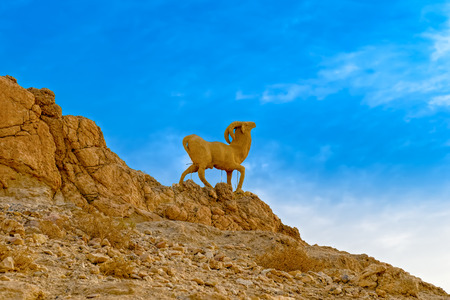 barbary: Monument of sheep in mountain oasis Chebika at border of Sahara, Tunisia, Africa