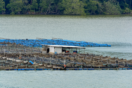 Floating fish farm in Johor Strait - aquaculture farms on the water where people breed fishes and crabs.