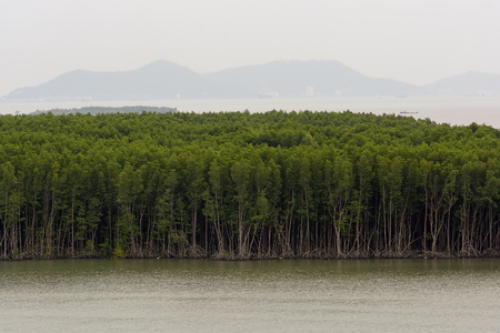 Mangrove trees forest and swamp along Song Long Tau (Long Tau river) shores in the southern Vietnam.