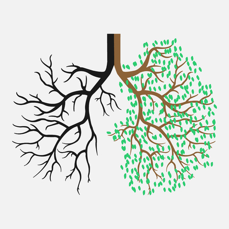 Human lungs. Respiratory system. The appearance of healthy and light lungs.Vector illustration