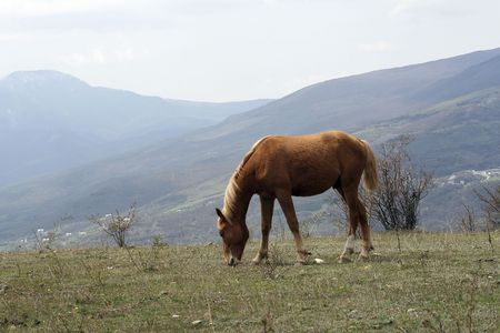 Horse grazed on a mountain meadow Stock Photo - 5918008