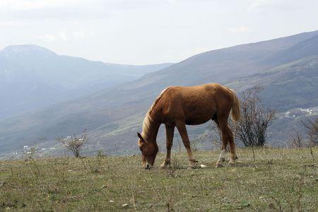 Horse grazed on a mountain meadow Stock Photo - 5918008