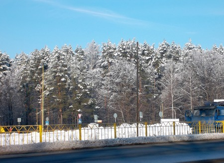 crown spire: Winter forest beside the road on a clear sunny day.