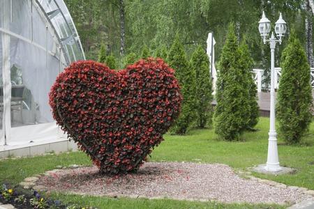 topiary: Big Heart topiary figure of fresh flowers