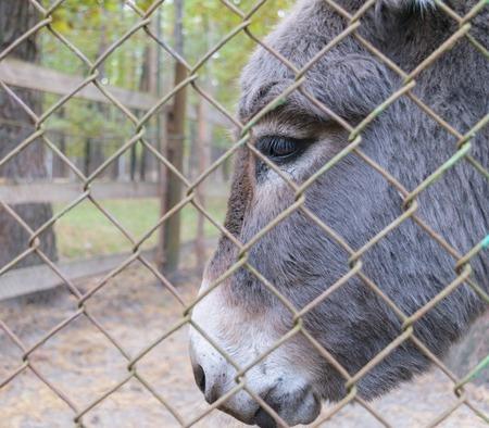 behind bars: Head of donkey behind bars in a zoo