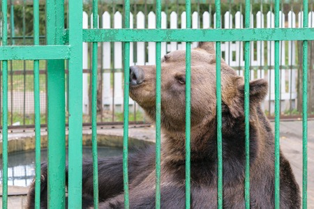 frightful: Brown bear in a cage