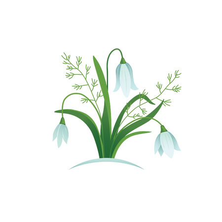 snowdrops: snowdrops flowers vector illustrated