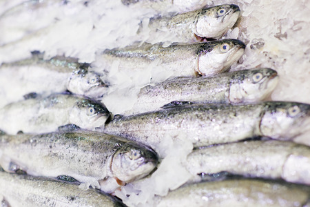 shelf ice: Trout fresh fish on ice. Fish on tray, counter. Fresh fish