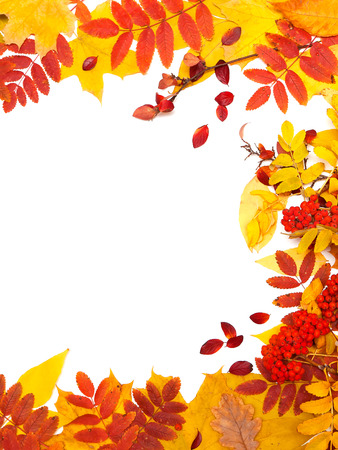 sorb: Autumn leaves on white background Stock Photo