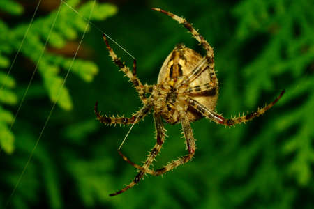 gro: Thickness spider Angle