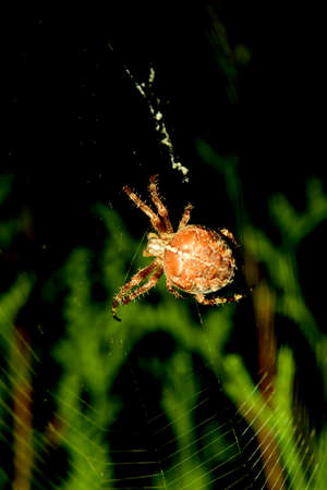 gro: Thick spider on the web