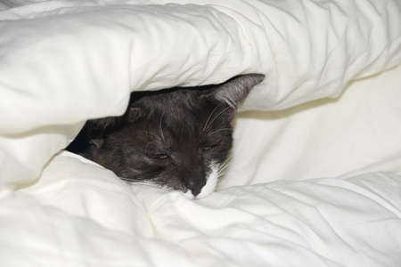 bedcover: Cat covered in bed