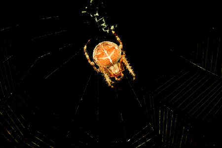 gro: Spider in its web