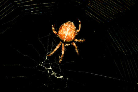 gro: thick spider on the web Stock Photo
