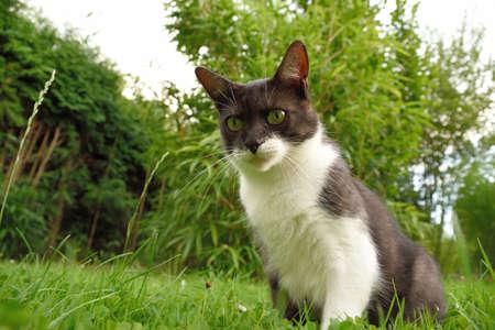 lurk: Cat on the watch Stock Photo