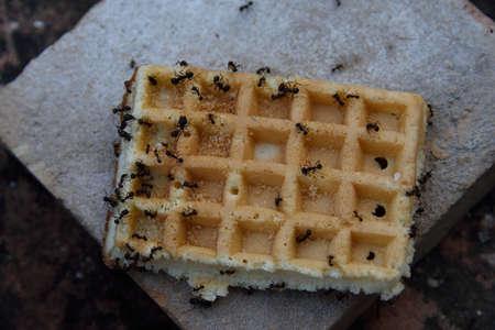 obtain: Ants obtain food Stock Photo