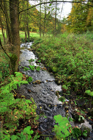brooklet: Stream in the nature reserve