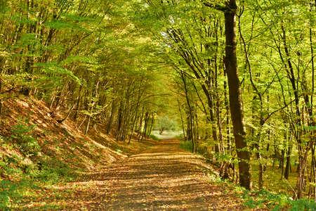 Herbstlicher Waldweg Standard-Bild - 50169701