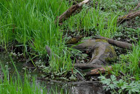 mundo contaminado: Old neum�tico en charco