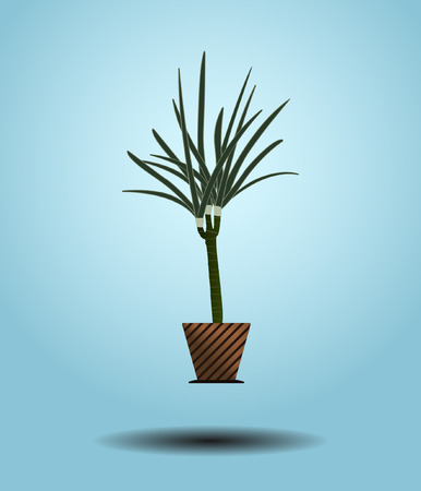 houseplant: Dracaena tree with green leaves. Green houseplant in brown flowerpot.