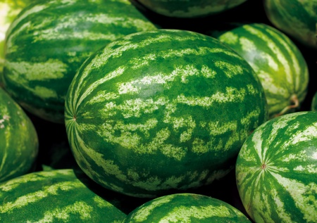 Watermelon Stock Photo - 11763200