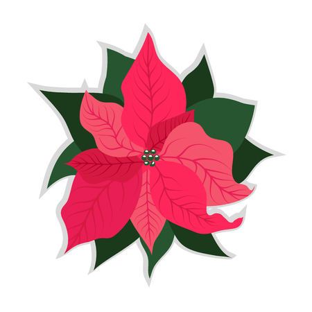 Poinsettia flower, symbol of Christmas. Christmas icon. Vector illustration