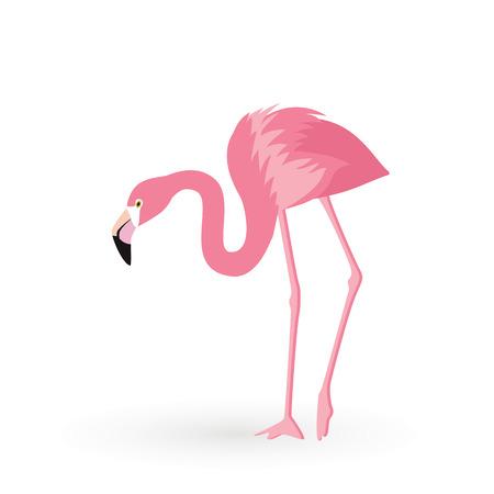 Pink flamingo . Vector illustration .Isolated on white background. Bird illustration design on background