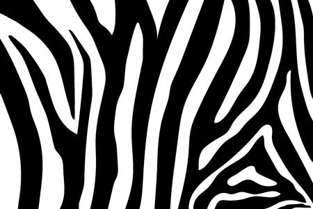 Zebra Stripes Pattern. Zebra print, animal skin, tiger stripes, abstract pattern, line background, fabric. Amazing hand drawn vector illustration. Poster, banner. Black and white artwork monochrome