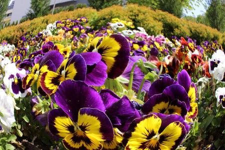 allover: flowers in jambol bulgaria center